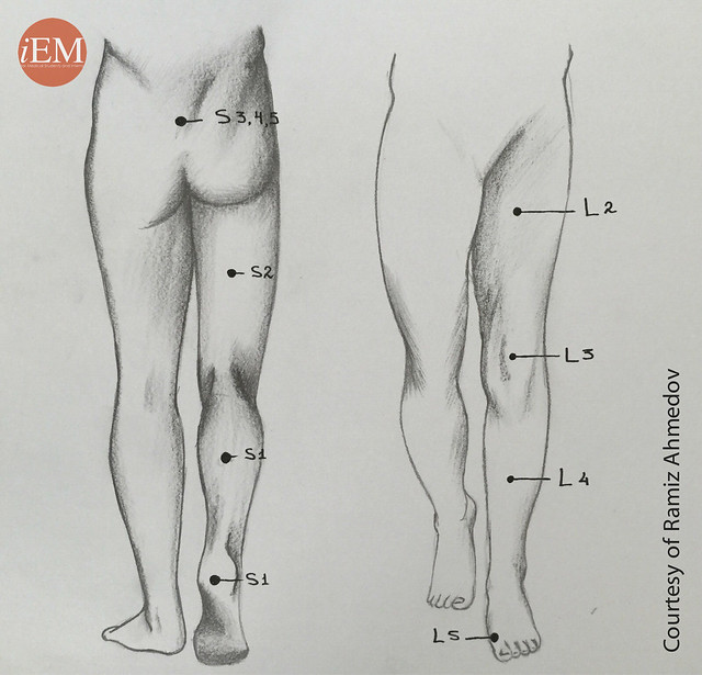 772.1 - Figure 1. Pain location and nerve roots