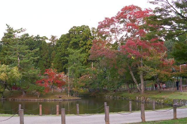 東大寺 池