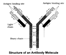 CBSE Sample Papers for Class 12 Biology Paper 4.9