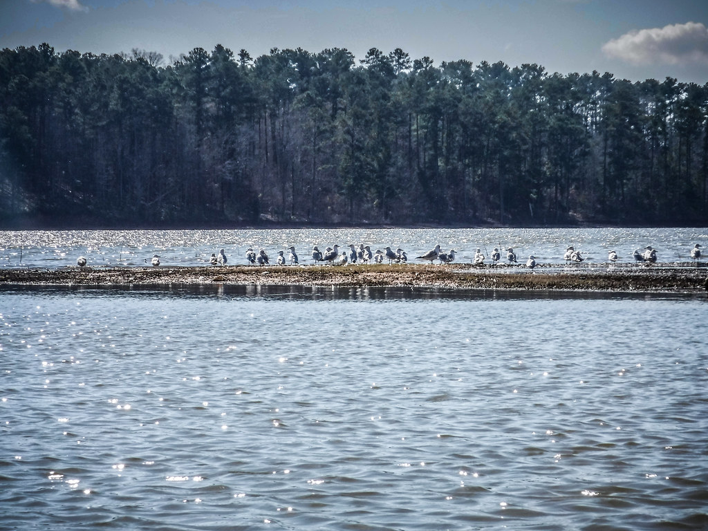 Clark Hill Reservoir-78