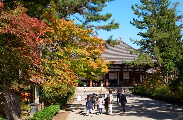 秋の唐招提寺
