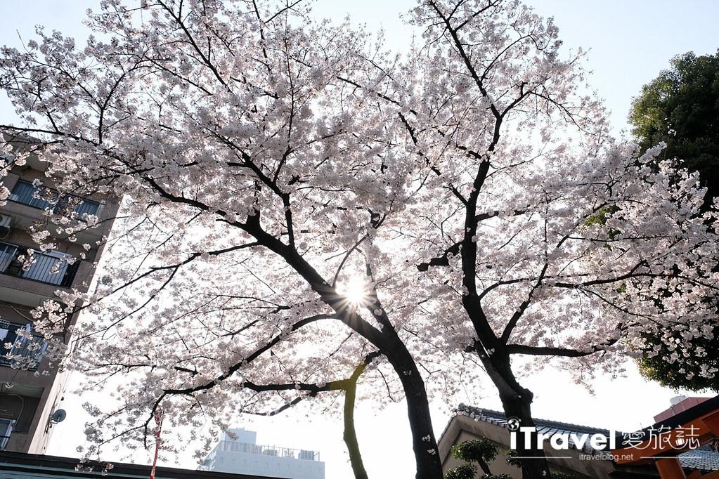 福岡賞櫻景點 櫛田神社 (26)