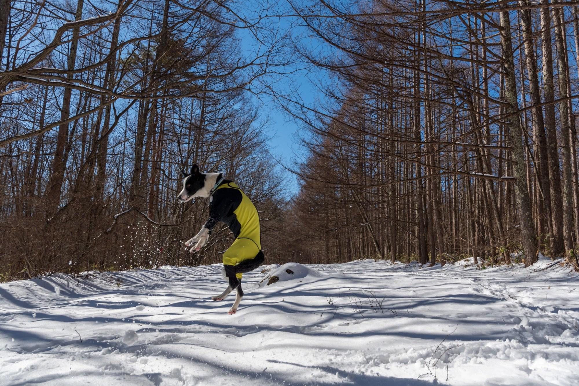 今季初雪遊び 2019/2/1-3のまとめ