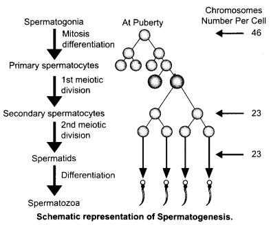 CBSE Sample Papers for Class 12 Biology Paper 5.4