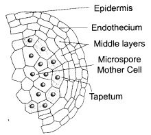 CBSE Sample Papers for Class 12 Biology Paper 3.1