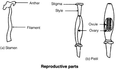 NCERT Solutions for Class 7 Science Chapter 12 Reproduction in Plants 1