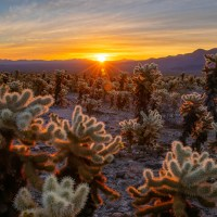 Joshua Tree National Park in day and a half