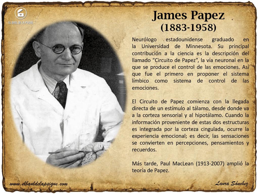 Circuito De Papez : Urp neuroanatomia circuito papez dr espinoza youtube