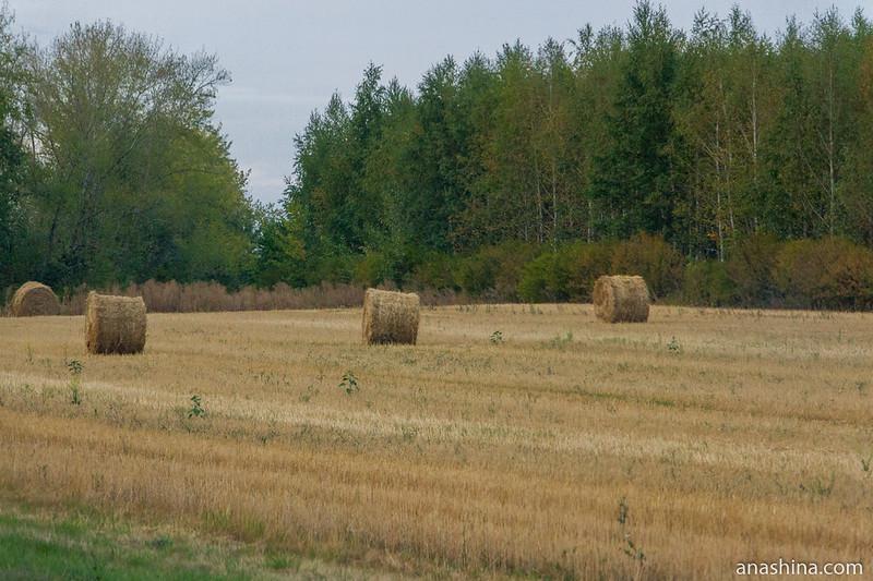 Заготовленное сено, Пензенская область