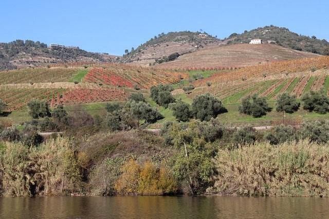 Valle del Duero desde Oporto