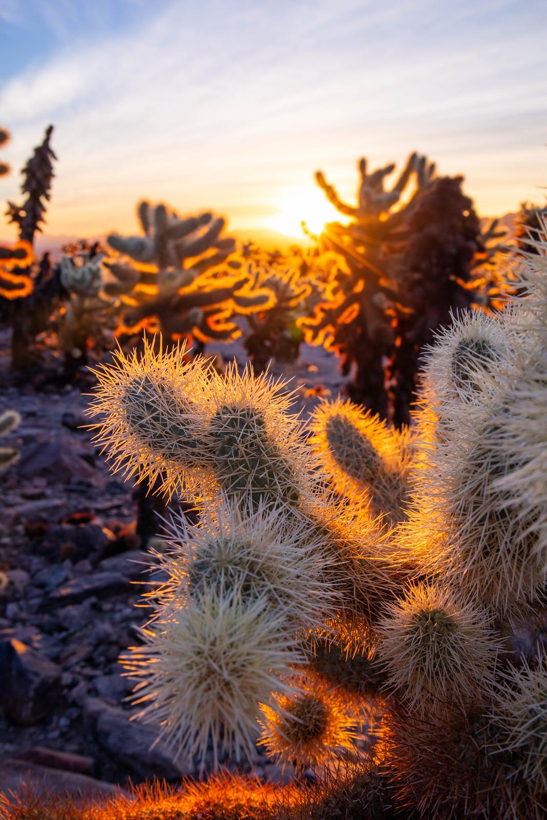11.23. Joshua Tree National Park