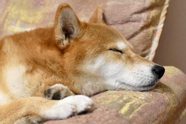 いざという時の救急病院を知っている飼い主の犬
