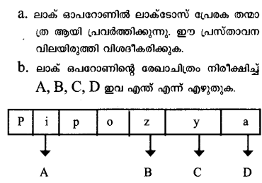 Plus Two Zoology Previous Year Question Papers and Answers 2018.25