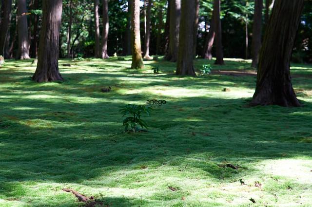 唐招提寺 苔の庭