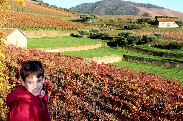 Tour al Valle del Duero desde Oporto