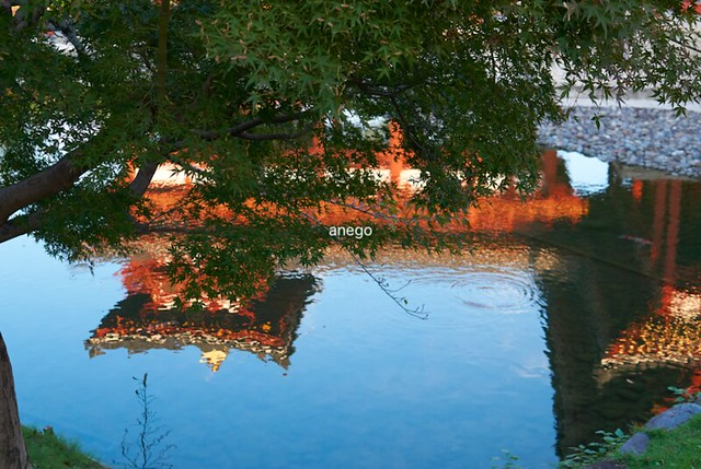 水面に映った鳳凰堂