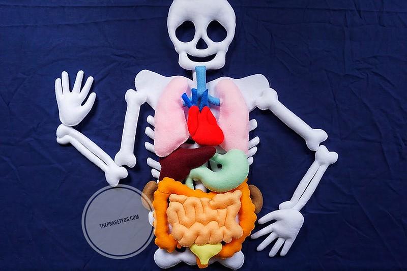 Human Organ Felt