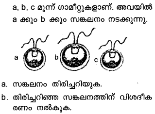 Plus Two Botany Model Question Papers Paper 3Q7.1