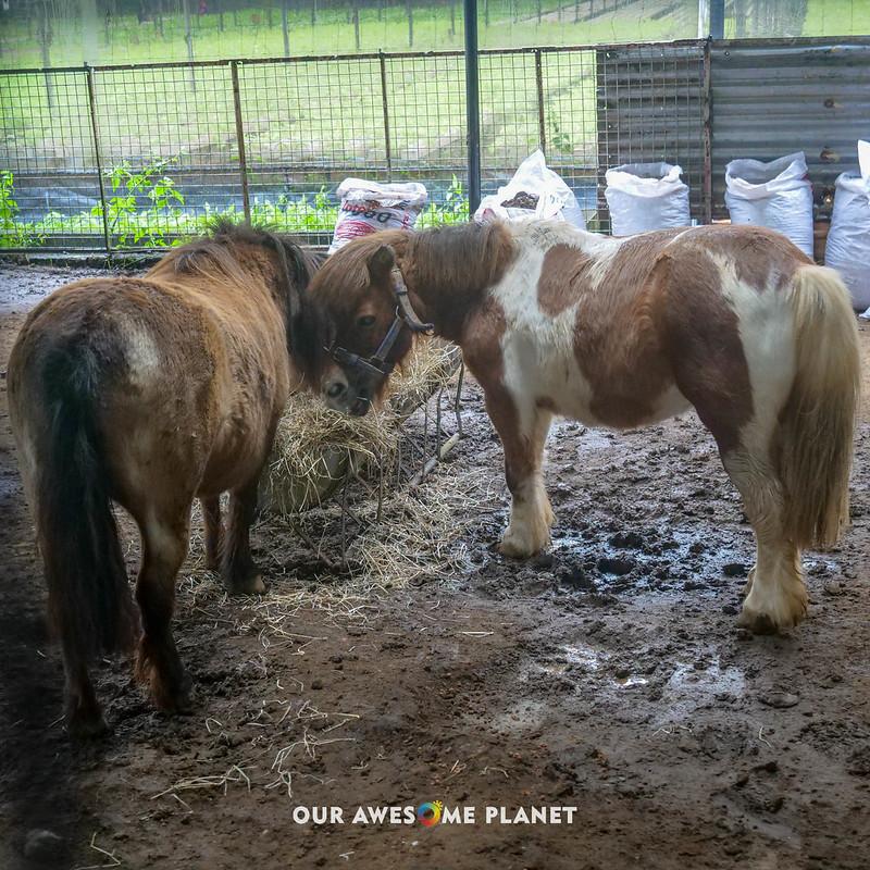 Yoki's Farm 2019-92.jpg