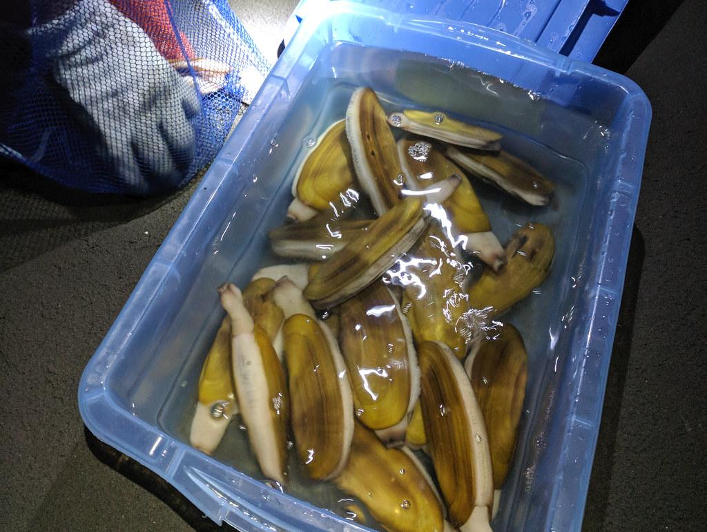 Harvested razor clams