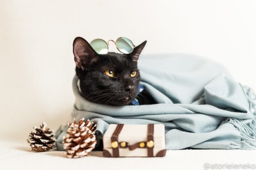 アトリエイエネコ Cat Photographer 46128205921_cbfb2047a7 1日1猫!おおさかねこ倶楽部 里活中のクロピー♪ 1日1猫!  黒猫 里親募集 茶トラ 猫写真 猫カフェ 猫 子猫 写真 保護猫カフェ 保護猫 ハチワレ ニャンとぴあ サビ猫 キジ猫 カメラ おおさかねこ倶楽部 Kitten Cute cat