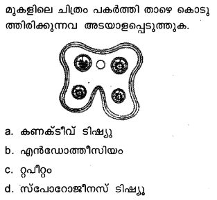 Plus Two Botany Model Question Papers Paper 3Q9.1