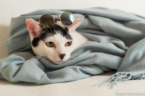 アトリエイエネコ Cat Photographer 31189158987_ef80f2e7ef 1日1猫!おおさかねこ倶楽部 里活中のマッチくん♪ 1日1猫!  里親募集 茶トラ 猫写真 猫カフェ 猫 子猫 写真 保護猫カフェ 保護猫 ハチワレ ニャンとぴあ サビ猫 キジ猫 カメラ おおさかねこ倶楽部 photo Kitten Cute cat