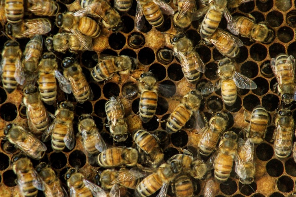 Bee story - Louis Mason