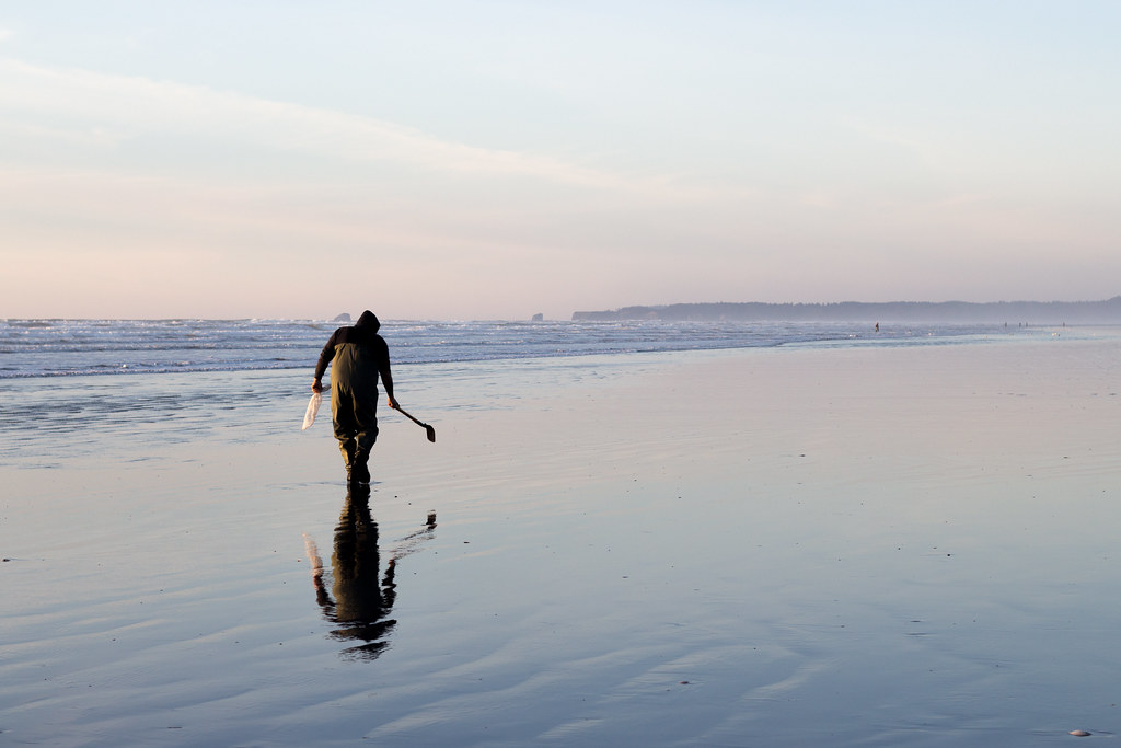 Man looking for razor clams along the beach