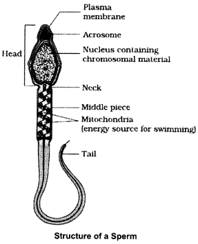 CBSE Sample Papers for Class 12 Biology Paper 3.2