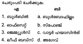Plus Two Botany Model Question Papers Paper 3Q15