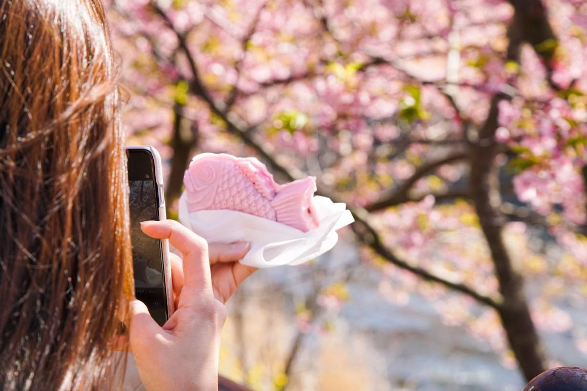 2020年日本櫻花開花預測