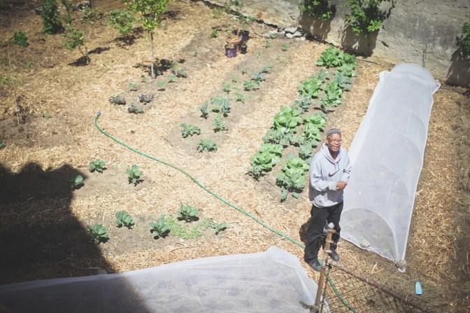 Yahya Sr. in the garden.