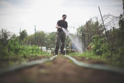 Gerry watering the Berries.