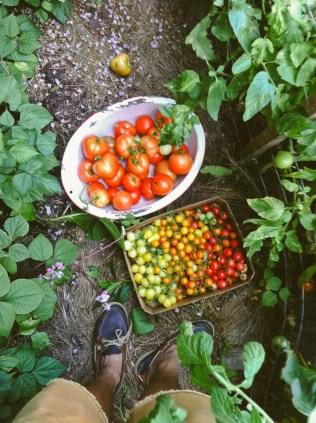 tomatoways (16 of 38)