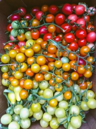 tomatoways (17 of 38)