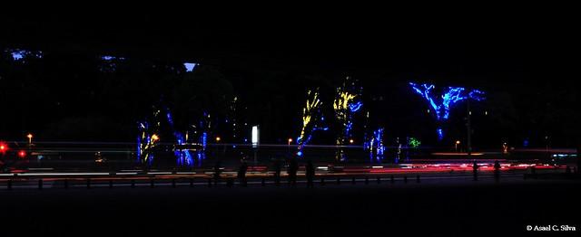 Iluminação de Natal no Parque do Trianon - Av. Paulista