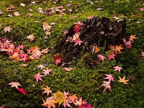 苔の庭に散る紅葉〜化野念仏寺