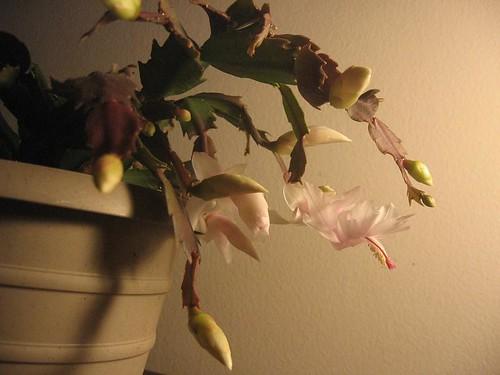 thx-cactus-2