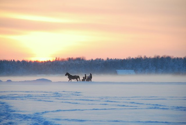 Horse-Drawn Sleigh Rides in Estonia