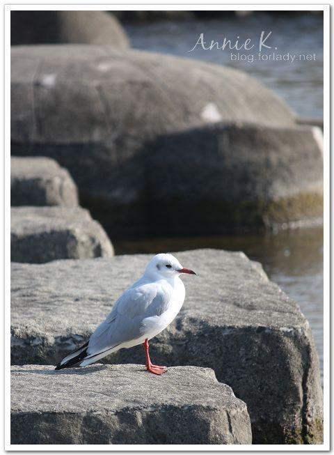 京都鴨川_鳥