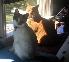 Sharing the Window