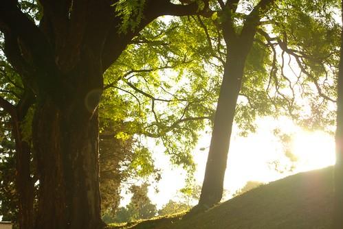 luz suave / 木漏れ日