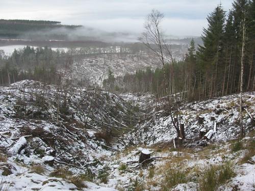 Edge of the felled area
