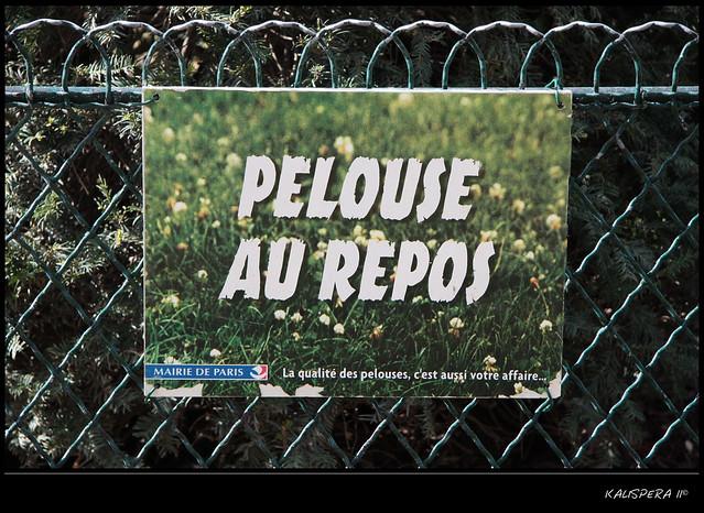 """""""pelouse au repos"""""""