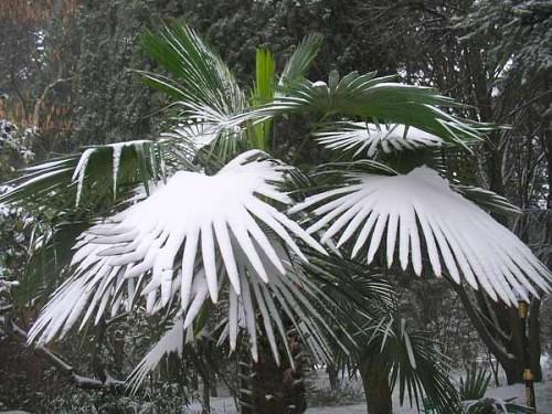 Зима в Таиланде