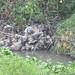 Humedal de Córdoba, Residuos solidos por Humedales Bogotá