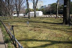 日比谷公園(第2花壇)