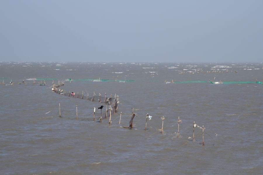20110205_08_Sea bank_03