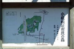 小机城址市民の森(案内看板)